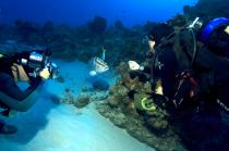 Divers in the Turks and Caicos Reef Ambassadors Program