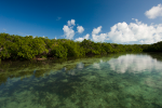 Mangrove forests face growing threats from unsustainable land development, pollution, clearing for agricultural use, and climate change. © Carrie Vonderhaar, Ocean Futures Society
