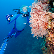 Jean-Michel Cousteau Diving, Fiji